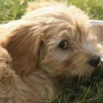 Profile photo of Cnewin